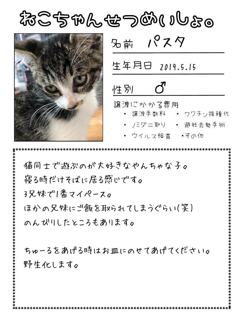 明日出る猫達の紹介です!!_d0233224_17111364.jpg