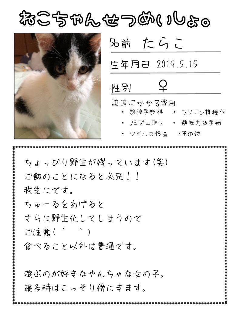 明日出る猫達の紹介です!!_d0233224_17111430.jpg