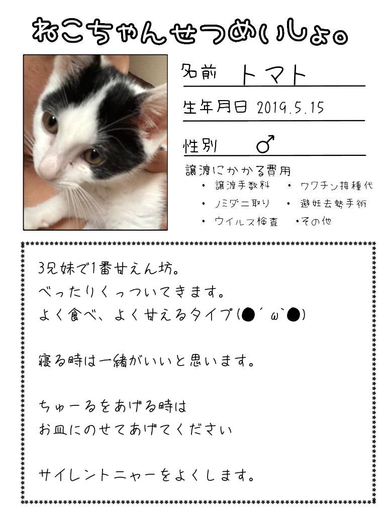 明日出る猫達の紹介です!!_d0233224_17111593.jpg