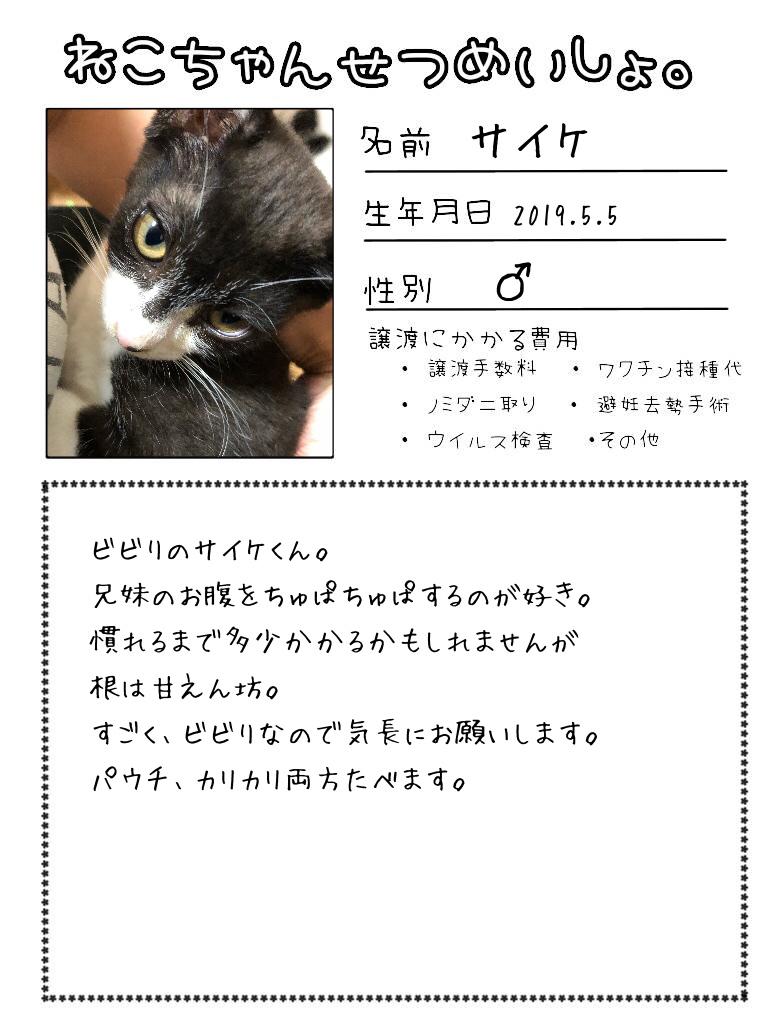 明日出る猫達の紹介です!!_d0233224_17111633.jpg