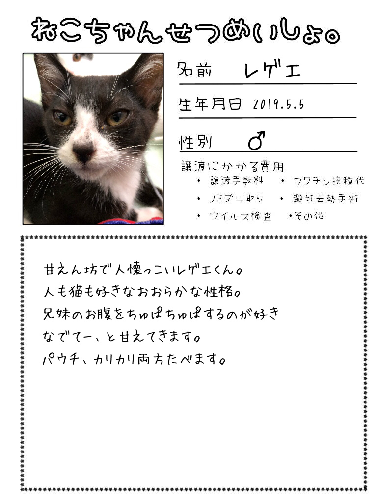 明日出る猫達の紹介です!!_d0233224_17111787.jpg