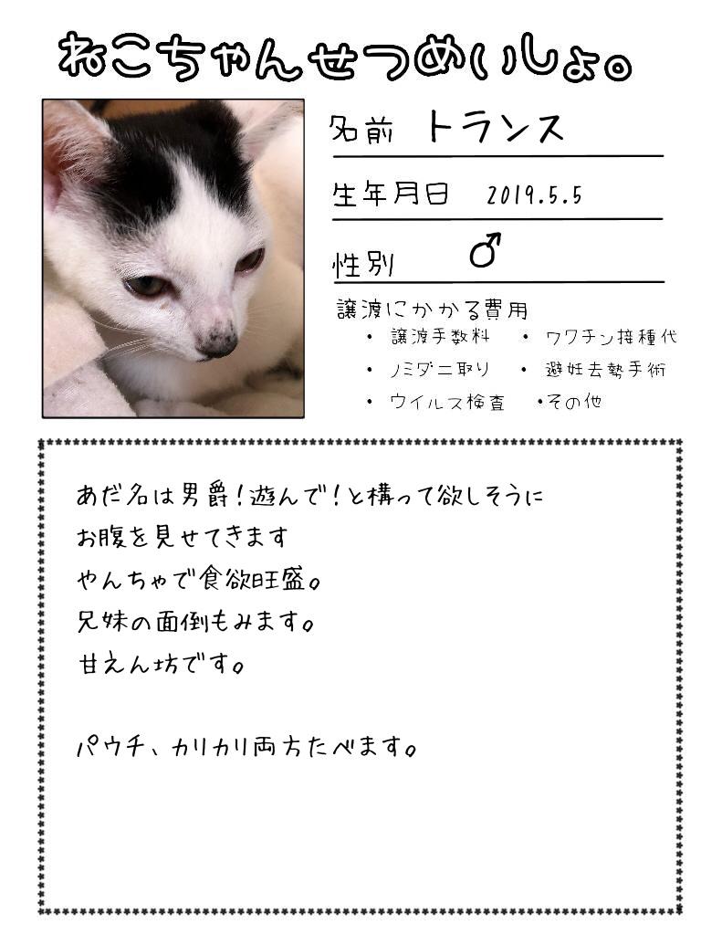 明日出る猫達の紹介です!!_d0233224_17120395.jpg