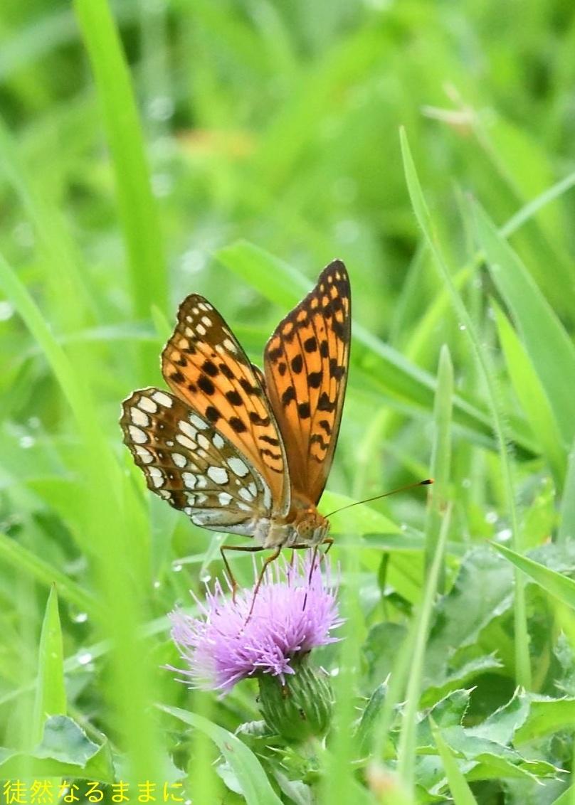 南阿蘇の蝶たち_d0285540_06253412.jpg
