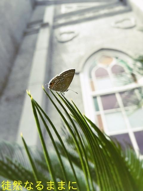 天草の蝶たち_d0285540_21122262.jpg