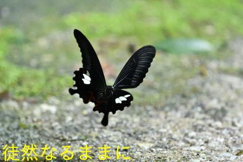 天草の蝶たち_d0285540_21342466.jpg