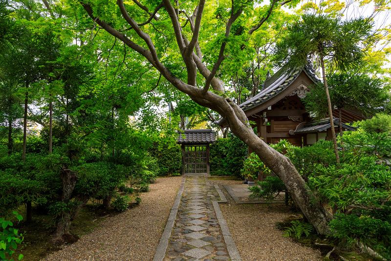 春の花咲く源光庵_f0155048_0111790.jpg