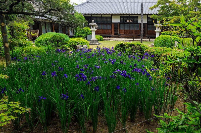 春の花咲く源光庵_f0155048_072576.jpg