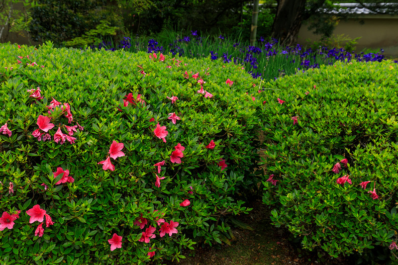 春の花咲く源光庵_f0155048_072750.jpg