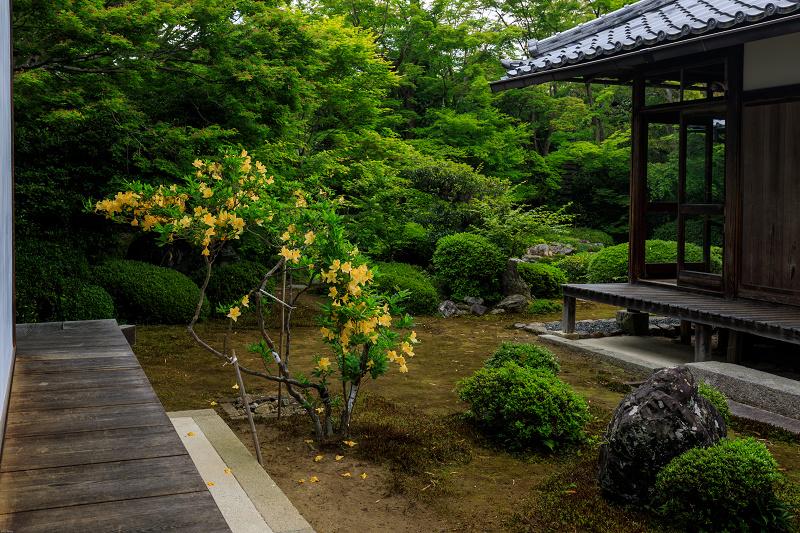 春の花咲く源光庵_f0155048_073994.jpg