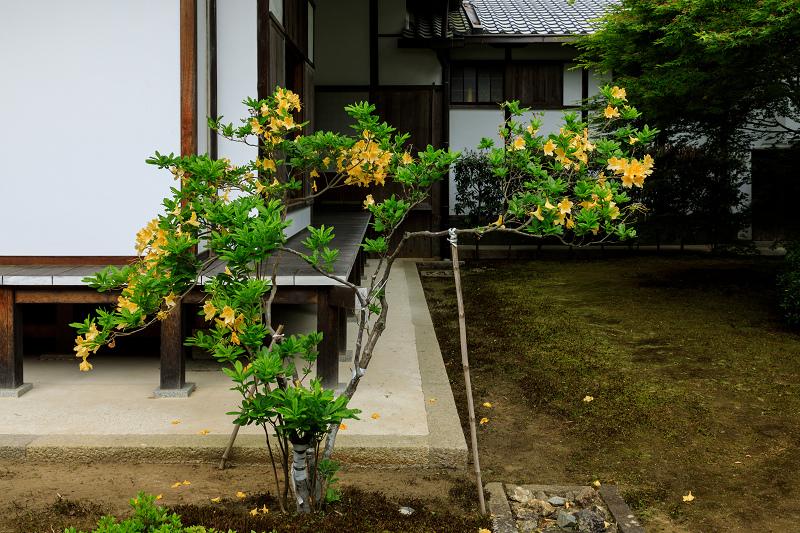 春の花咲く源光庵_f0155048_074235.jpg
