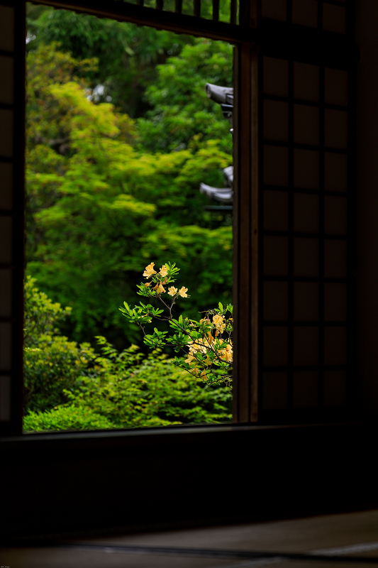 春の花咲く源光庵_f0155048_08244.jpg