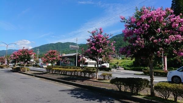 ようやく「サルスベリの木」の花がきれいになってきました❣_e0020051_12074600.jpg