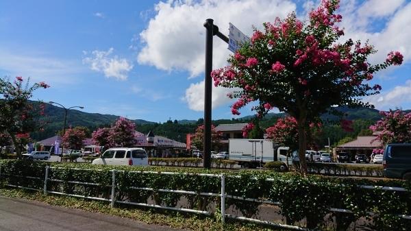 ようやく「サルスベリの木」の花がきれいになってきました❣_e0020051_12085729.jpg