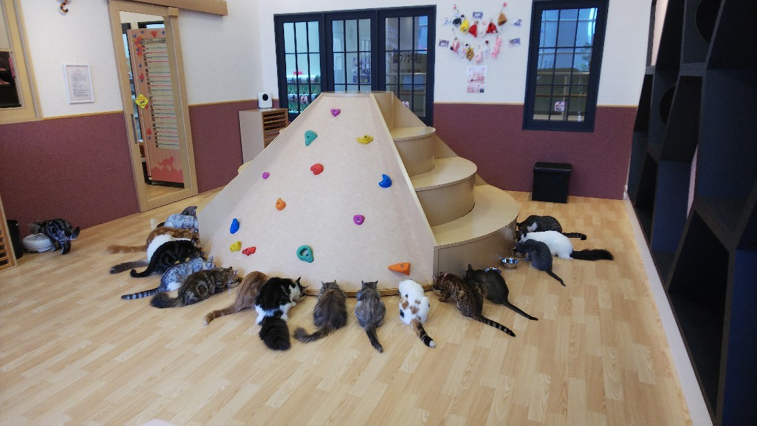 今日は昼間、初猫カフ..._d0194457_08353639.jpg