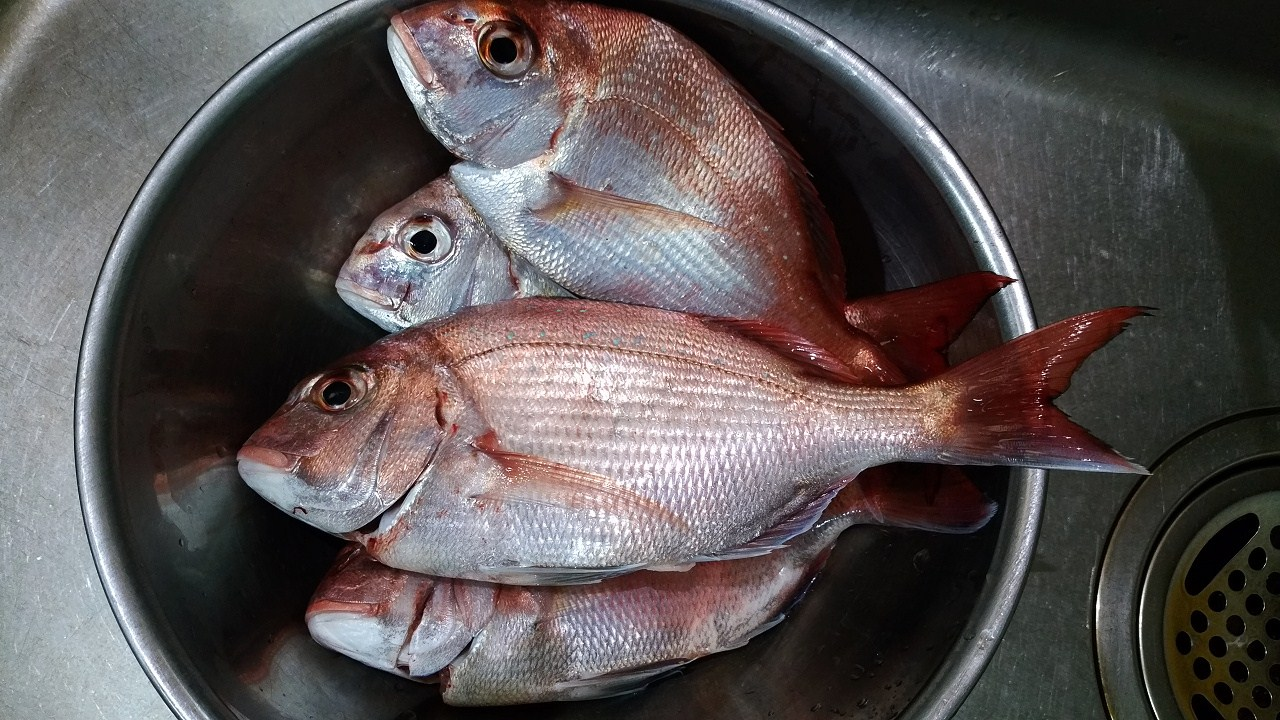 日曜日は熊本県玉名漁港より鯛釣りへ出船_a0278866_916499.jpg