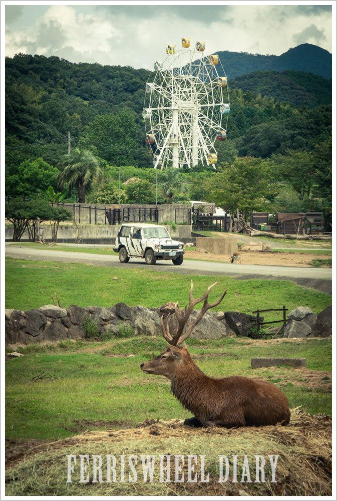 秋吉台自然公園サファリランドの観覧車_c0115707_12282120.jpg