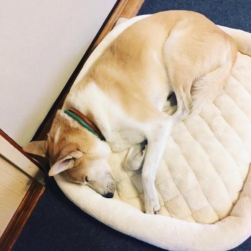 子犬の撮影会_b0090517_11435962.jpg