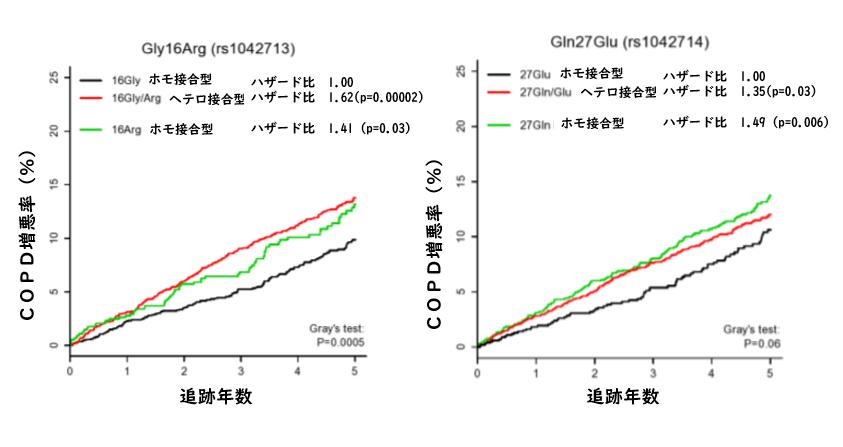 β2受容体ジェノタイプはCOPD重症増悪に影響を与える_e0156318_1045473.png