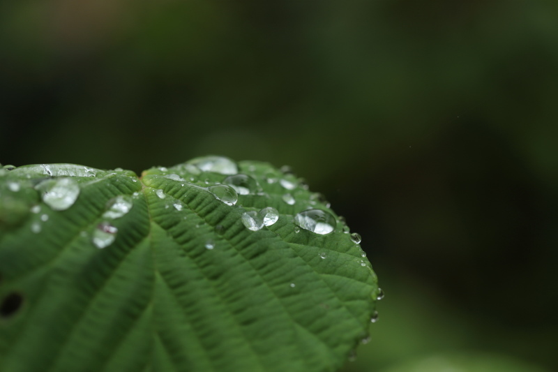 雨の日_e0169421_20564487.jpg