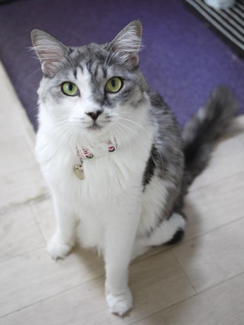 猫のお留守番 蓮ちゃん編。_a0143140_21554553.jpg