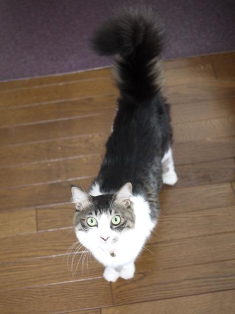 猫のお留守番 蘭ちゃん編。_a0143140_22001056.jpg