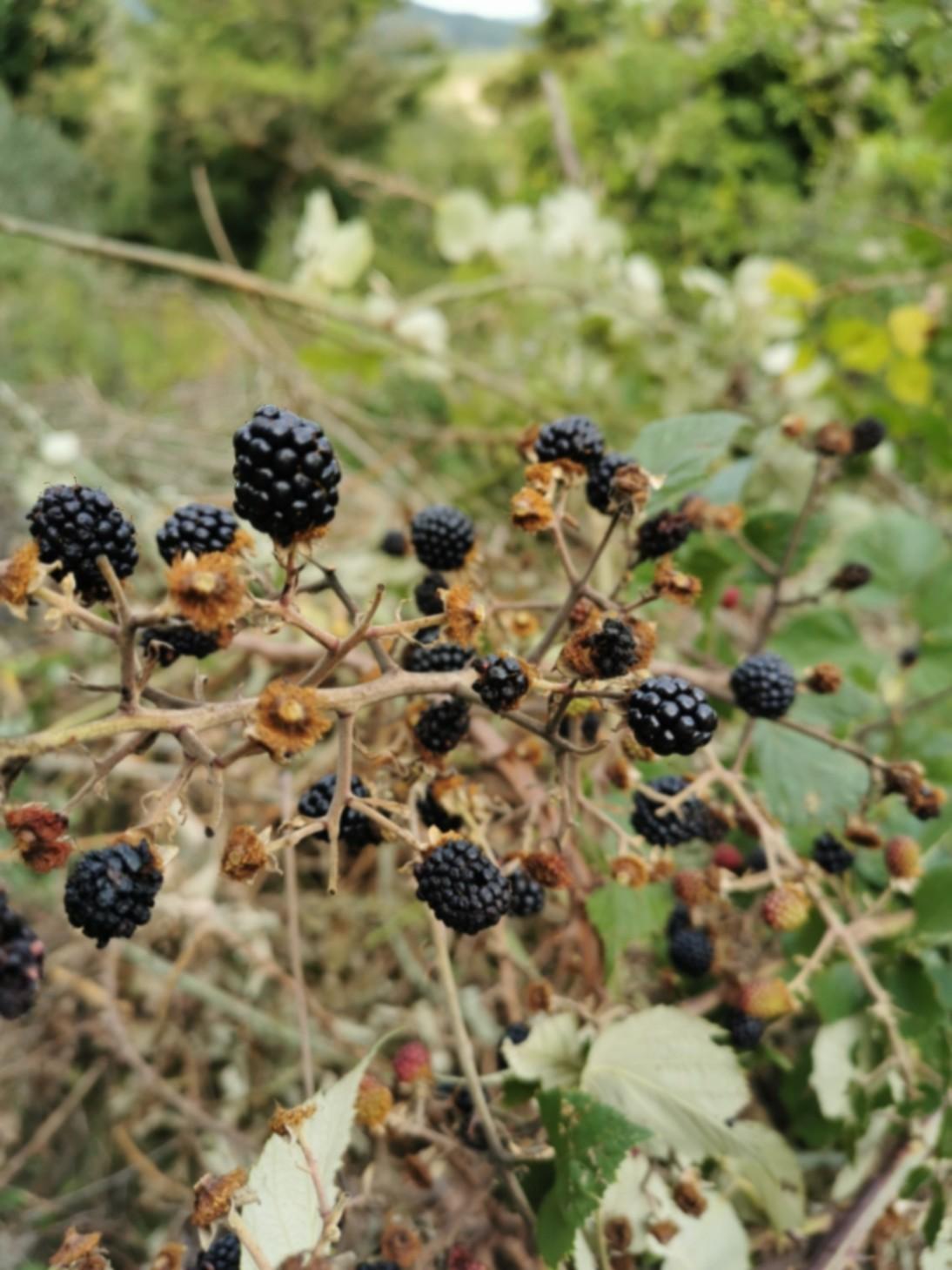 森の黒い真珠、モーレの季節です_f0106597_03260401.jpg