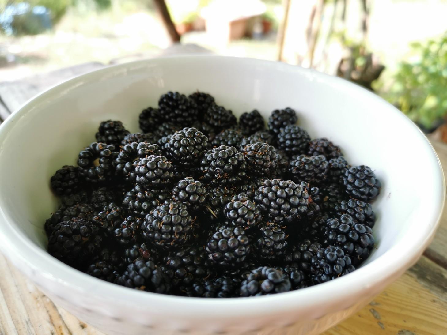 森の黒い真珠、モーレの季節です_f0106597_03264879.jpg
