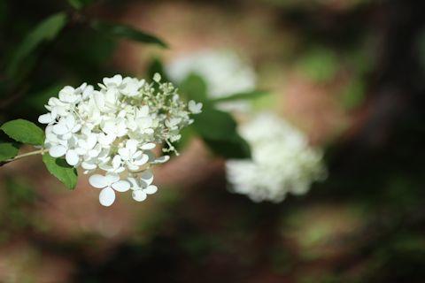 今日のお花たち&「花火大会」_c0090198_16031740.jpg