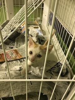 【移動先募集】チャアくんとシシマルくんと子猫たち_f0242002_11222934.jpg
