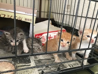 【移動先募集】チャアくんとシシマルくんと子猫たち_f0242002_11265378.jpg