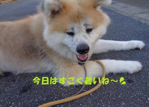 f0121712_00243244.jpg