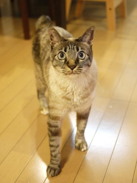 猫のお留守番 ルノーちゃん編。_a0143140_20392617.jpg