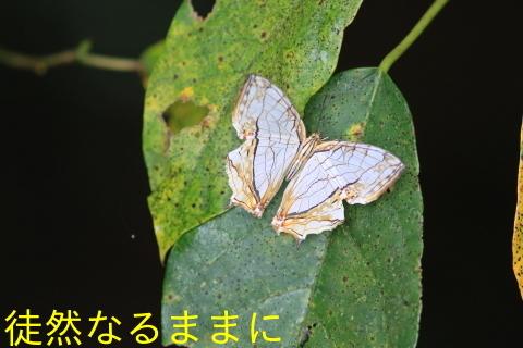 天草の蝶たち_d0285540_18065227.jpg