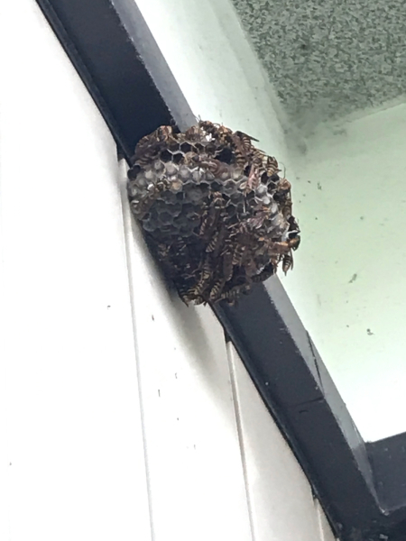 実家で蜂の巣退治_d0322040_23390941.jpg