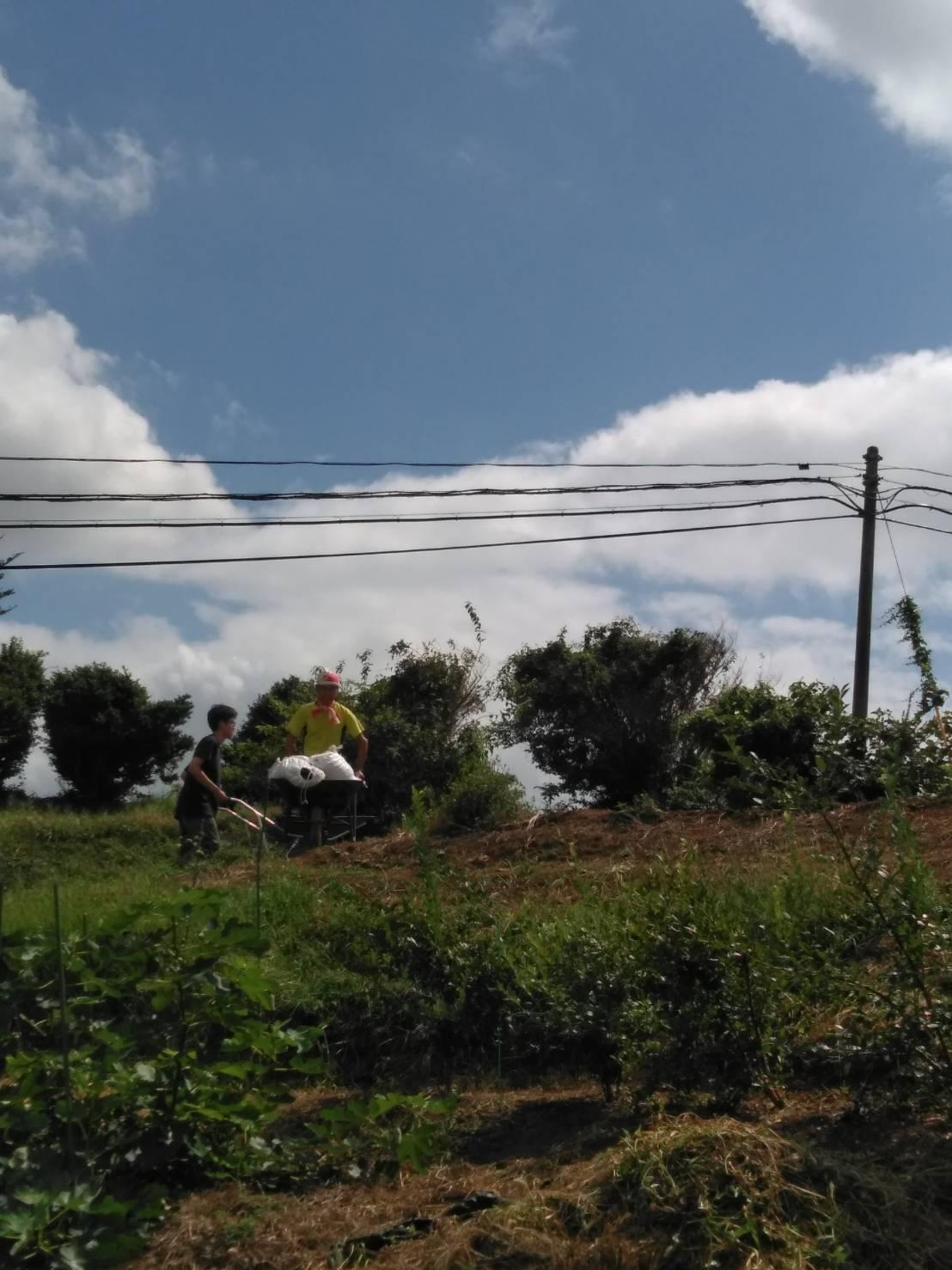 台風15号が来る前に 堆肥の運び入れ 長ねぎの土寄せ・・パラソルやテーブル椅子の養生_c0222448_12481107.jpg
