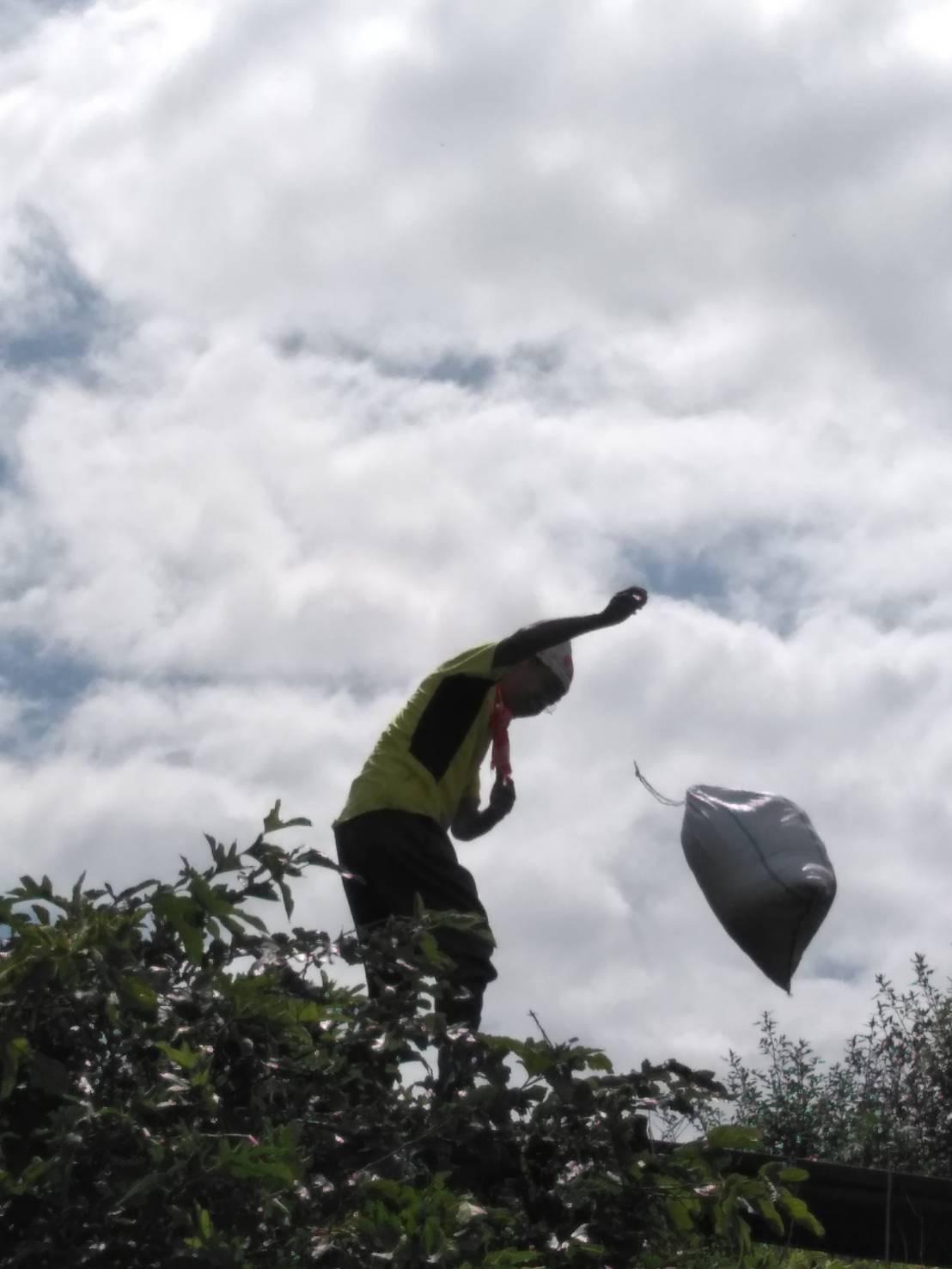 台風15号が来る前に 堆肥の運び入れ 長ねぎの土寄せ・・パラソルやテーブル椅子の養生_c0222448_12483807.jpg