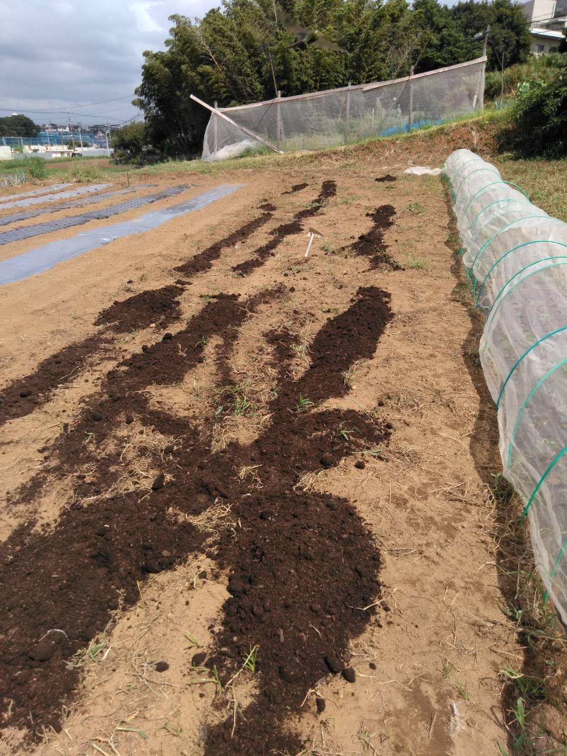 台風15号が来る前に 堆肥の運び入れ 長ねぎの土寄せ・・パラソルやテーブル椅子の養生_c0222448_12490402.jpg