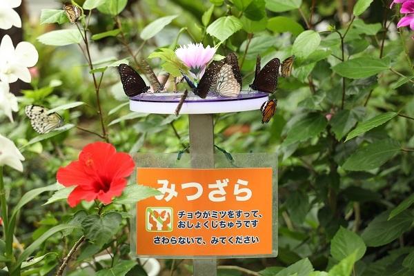 やっぱり花に蝶ですね_b0328557_20434194.jpg