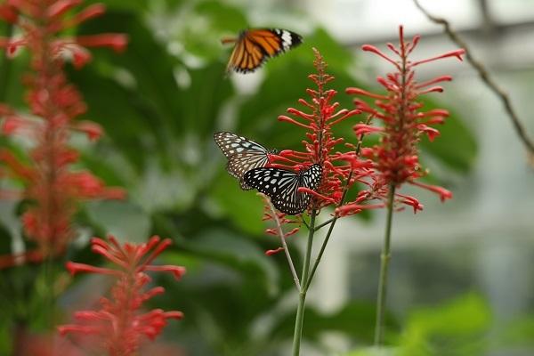 やっぱり花に蝶ですね_b0328557_20435751.jpg