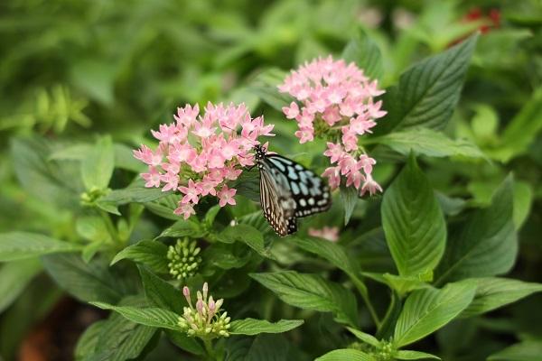 やっぱり花に蝶ですね_b0328557_20442727.jpg