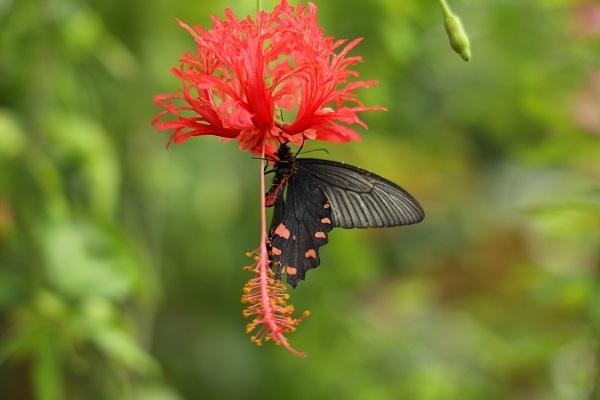 やっぱり花に蝶ですね_b0328557_20451326.jpg