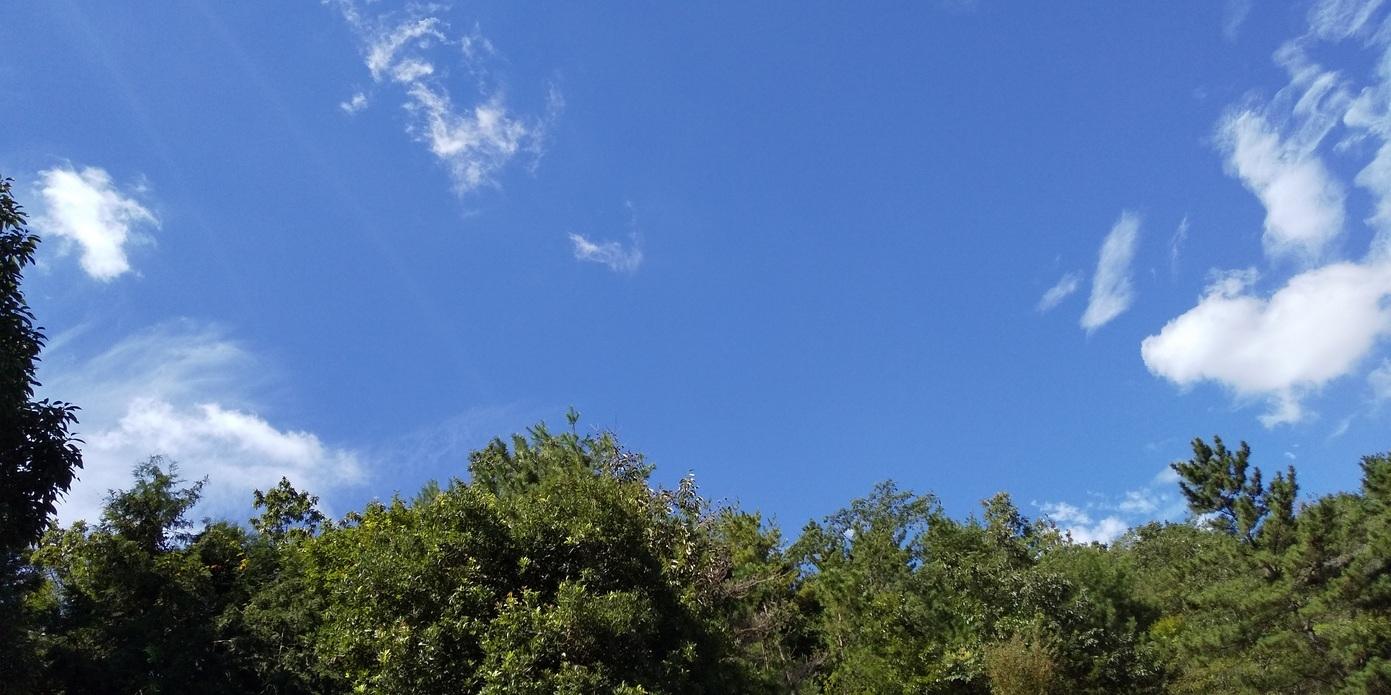 🌞 超夏日 💦 融けまくり~の猪名川町 💦 たんぽぽ宣伝カーと仲間たち 🌝 おぉ~黒川のセミたちも元気です 🎶_f0061067_18191159.jpg