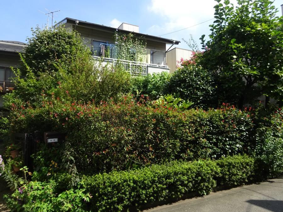 庭の手入れ_f0059673_20502196.jpg