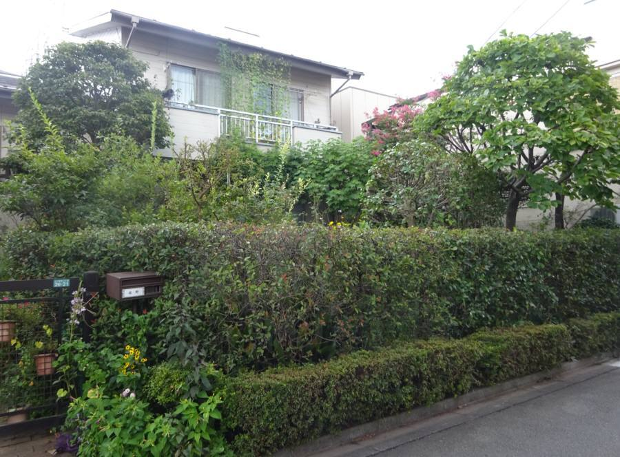 庭の手入れ_f0059673_20504067.jpg