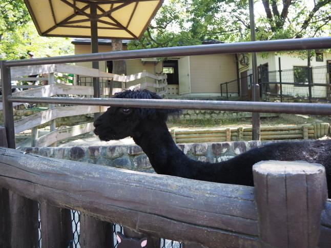 五月山動物園_f0370091_22571955.jpg