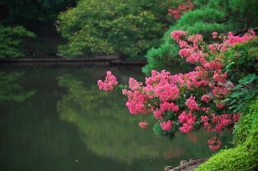 新宿御苑の夏の終わり3_a0263109_21275616.jpg