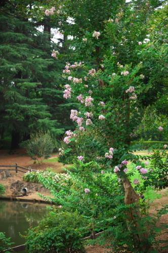 新宿御苑の夏の終わり3_a0263109_21275727.jpg