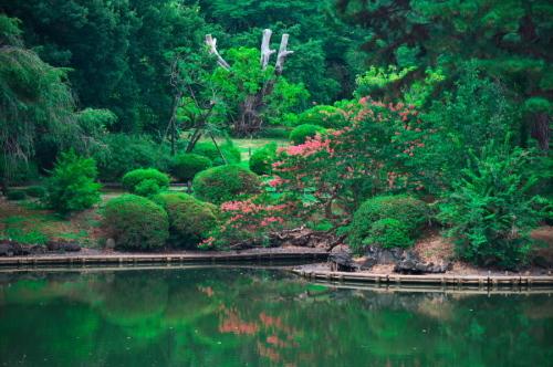 新宿御苑の夏の終わり3_a0263109_21275833.jpg