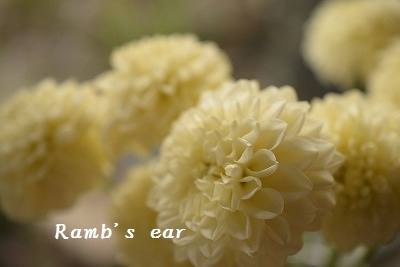 本日のお花♪_e0128909_10390477.jpg