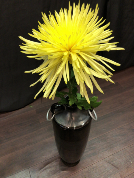 秋の草花を代表する名花!_a0300110_10144597.jpg